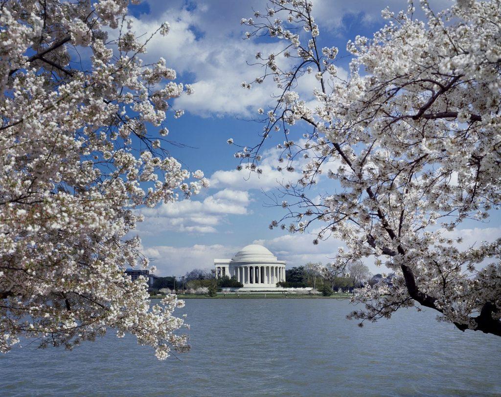 Florada das cerejeiras em Washington nos Estados Unidos