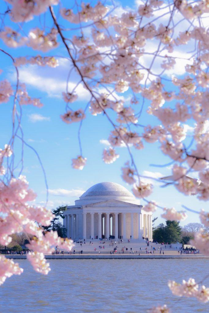 cerejeiras em washington nos Estados Unidos