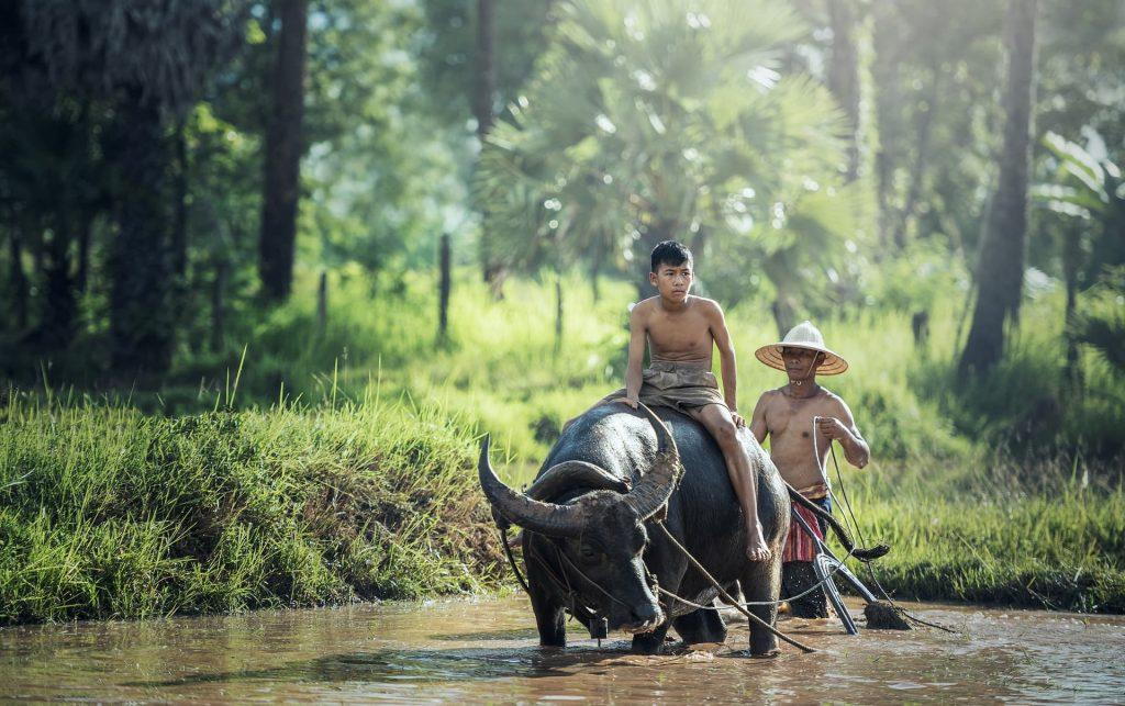 Menino andando de bufalo no Laos