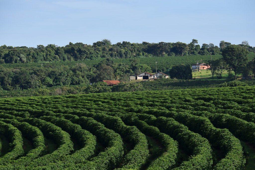 Fazendas de Café em MG