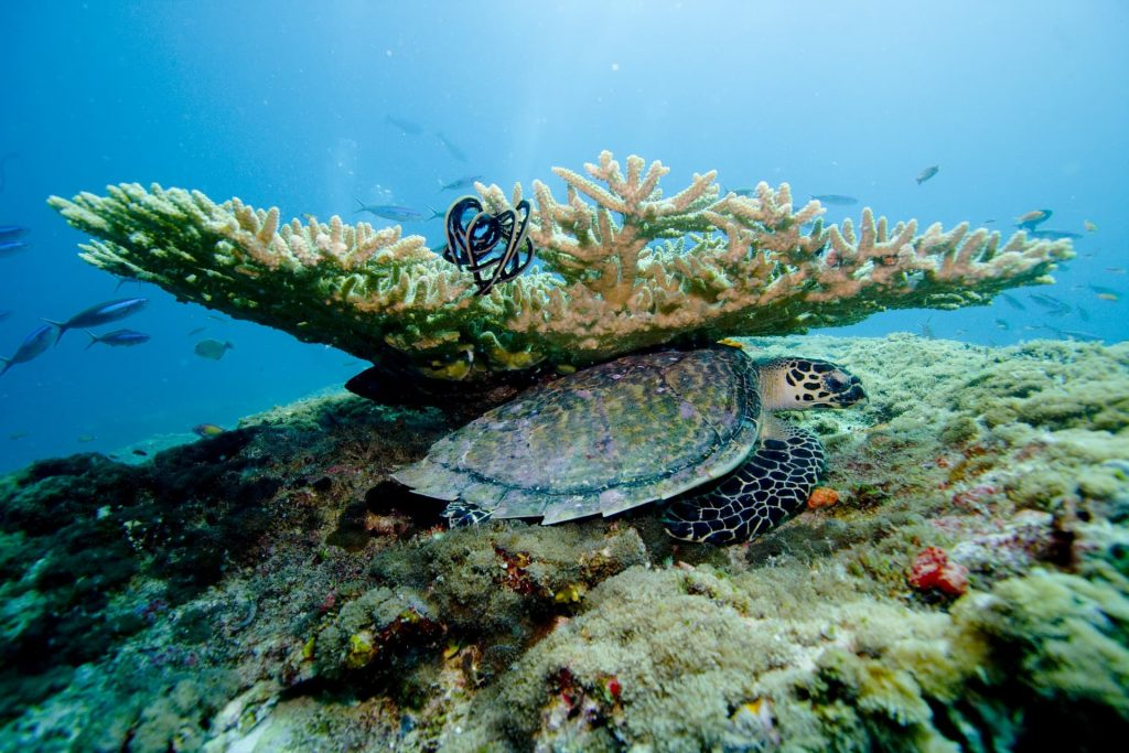 Recifes de Corais Ilhas Maldivas