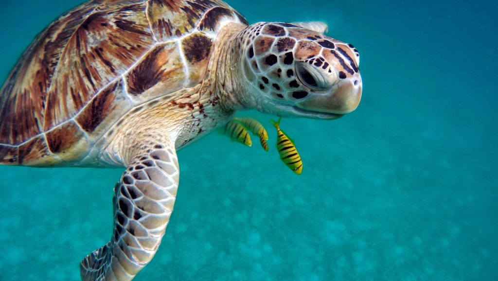 Ilhas Maldivas Tartarugas