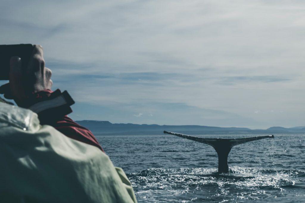 Baleias na Islândia